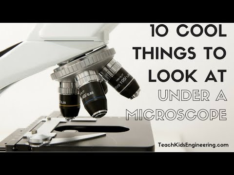 10 Cool Things to View Under a Microscope