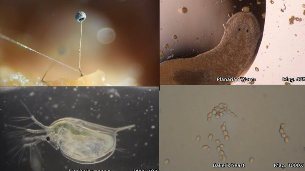 The Amazing Microscopic World