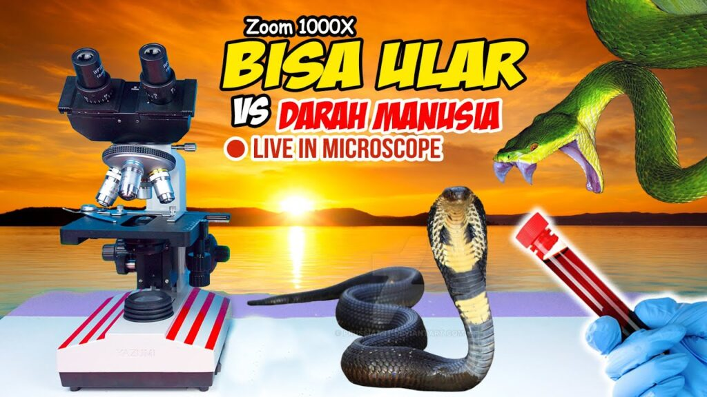 ZOOM 1000X: HUMAN BLOOD vs SNAKE VENOM (Cobra & Viper) in Microscope | BISA ULAR VS DARAH